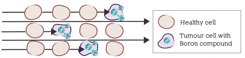 Irradiación de células con BNCT - NEUTRONES PARA MEDICINA